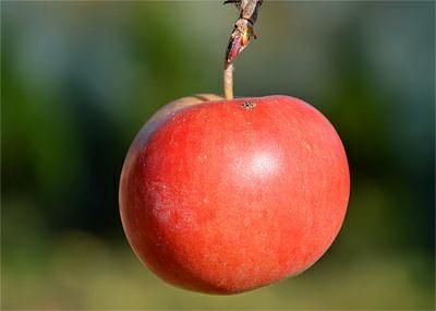 Jablko je antioxidant